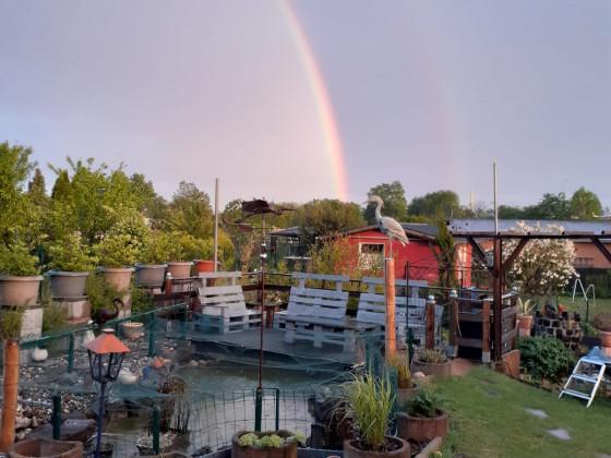Durchgehender Regenbogen in der Gartenanlage