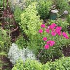 Pflanzenpracht