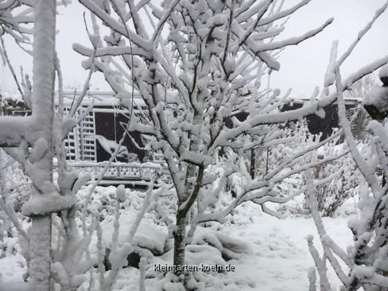 Gartenanlage im Schnee