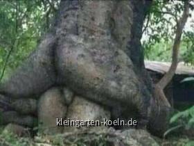 Witzige Sachen aus dem Garten oder der Natur
