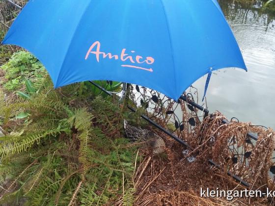 Regenschutz für Elfriede